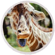 Round Beach Towel featuring the photograph Giraffe by Andrea Anderegg