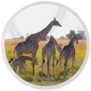 Round Beach Towel featuring the photograph Giraffe Family by Betty-Anne McDonald
