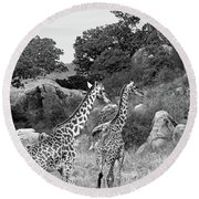 Giraffe Family In Africa In Black And White Round Beach Towel