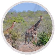 Giraffe Family On Safari Round Beach Towel