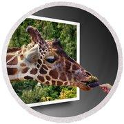 Giraffe Feeding Out Of Frame Round Beach Towel