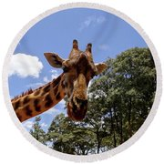 Giraffe Getting Personal 4 Round Beach Towel