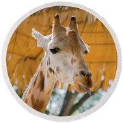 Giraffe In The Zoo. Round Beach Towel