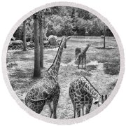 Round Beach Towel featuring the photograph Giraffe Reticulated by Howard Salmon
