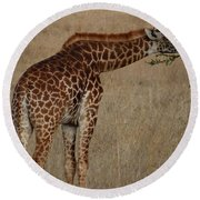 Giraffes Eating - Side View Round Beach Towel