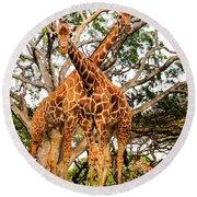 Giraffe's Looking Round Beach Towel