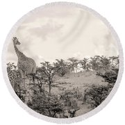 Round Beach Towel featuring the photograph Giraffes by Stefano Buonamici