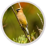 Glacier Cedar Waxwing Round Beach Towel by Adam Jewell