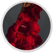 Gladiolus Against A Dark Cloud Round Beach Towel