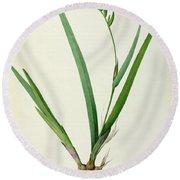 Gladiolus Cardinalis Round Beach Towel
