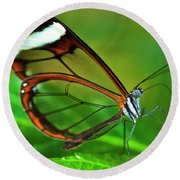 Round Beach Towel featuring the photograph Glasswinged Butterfly by Ralph A Ledergerber