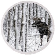 Glimpse Of Bull Moose Round Beach Towel