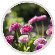 Round Beach Towel featuring the photograph Glittering Daisies by Helga Novelli