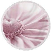 Gloriosa Daisy In Pink  Round Beach Towel by Sandra Foster