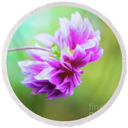 Glorious Autumn Dahlia Round Beach Towel