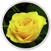 Glorious Yellow Rose Round Beach Towel