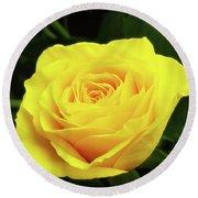 Glorious Yellow Rose Round Beach Towel
