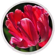 Glowing Red Tulip Round Beach Towel by Rona Black