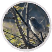 Gnatcatcher Round Beach Towel