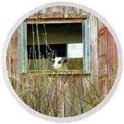 Goat In The Window Round Beach Towel by Donald C Morgan