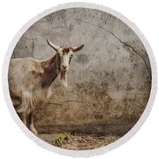 Round Beach Towel featuring the photograph London, England - Goat by Mark Forte