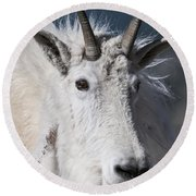 Goat Portrait Round Beach Towel