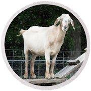 Goat Smile Round Beach Towel