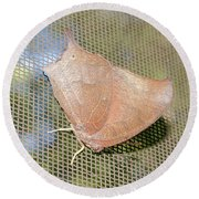 Goatweed Butterfly Round Beach Towel by Donna Brown