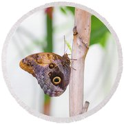 Round Beach Towel featuring the photograph Gold And Brown Butterfly by Raphael Lopez