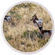 Golden Antelope Herd Round Beach Towel