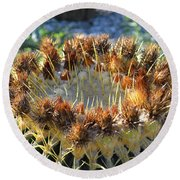 Round Beach Towel featuring the photograph Golden Barrel Cactus by Glenn McCarthy Art and Photography