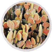 Round Beach Towel featuring the photograph Golden Beaver Tail Catcus by Linda Phelps