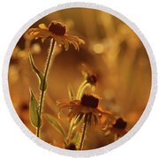 Golden Black Eyed Susan Round Beach Towel