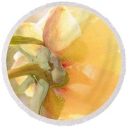 Golden Bowl Tree Peony Bloom - Back Round Beach Towel