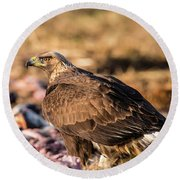 Golden Eagle's Back Round Beach Towel by Torbjorn Swenelius