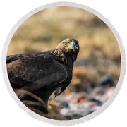 Round Beach Towel featuring the photograph Golden Eagle's Glance by Torbjorn Swenelius