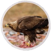 Round Beach Towel featuring the photograph Golden Eagle's Profile by Torbjorn Swenelius