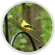 Golden Finch Round Beach Towel