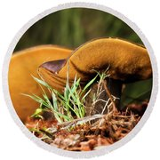Golden Mushrooms 001 Round Beach Towel by Kevin Chippindall