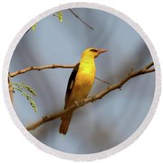 Golden Orioles Round Beach Towel