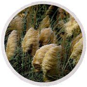 Golden Pampas In The Wind Round Beach Towel