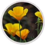 Golden Poppies  Round Beach Towel