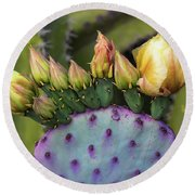 Round Beach Towel featuring the photograph Golden Prickly Pear Buds  by Saija Lehtonen