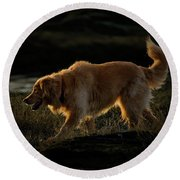 Round Beach Towel featuring the photograph Golden by Randy Hall