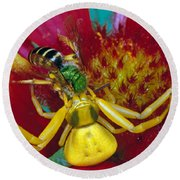 Goldenrod Crab Spider Misumena Vatia Round Beach Towel by Panoramic Images