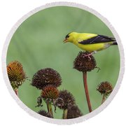 Goldfinch And Coneflowers Round Beach Towel