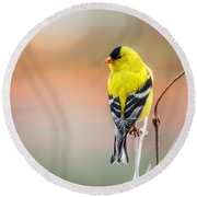Goldfinch At Sunrise Round Beach Towel