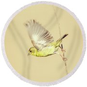 Goldfinch Flying Off  Round Beach Towel