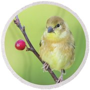 Goldfinch In The Backyard Round Beach Towel