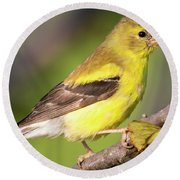Round Beach Towel featuring the photograph Goldfinch In The Early Morning  by Ricky L Jones